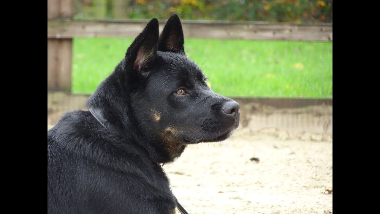 Best Dog Breeds For Recall