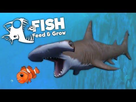 Hammerhead Shark Attacks Everything! - Feed and Grow Fish Gameplay
