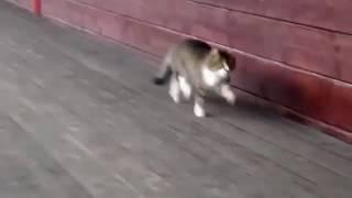 видео приколы ржачные про животных 2016