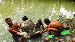 big net fishing | fishing in the village | traditional net fishing