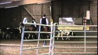 Working Equitation RinderarbeitLeverkusen 2015 Gernot Weber mit Aramis