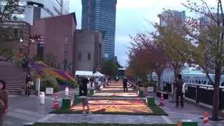 Япония. Картины из лепестков роз на острове Харуми в Токио