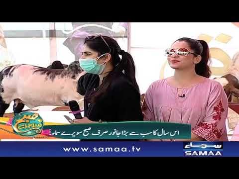 Sohrab Cow Mandi | Subh Saverey Samaa Kay Saath | SAMAA TV | Sanam Baloch | 09 Aug 2018