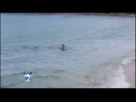 Warning signs posted after shark spotted off Haleiwa