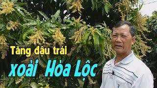 Biện pháp tăng đậu trái cho xoài cát Hòa Lộc của nhà vườn Nguyễn Văn Đi