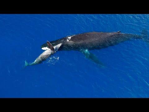 Experience the Ultimate Hawaii Adventure Vacation with Open Ocean Safari - Kona Freediving