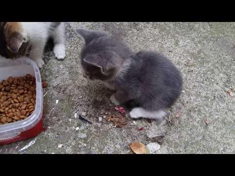 Five Baby Kittens Eating Food | Angry kitten | Cute Kittens