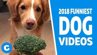 Funny Dog Videos 2018