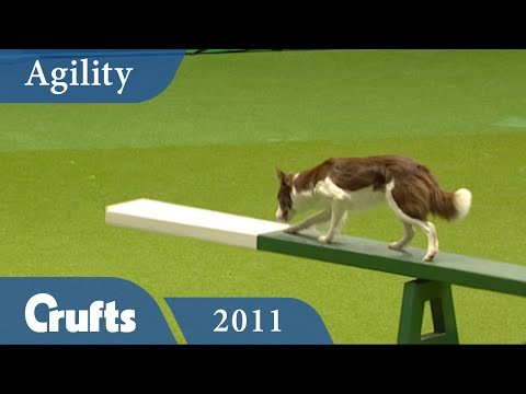 Agility - International Invitation - Large 2011 | Crufts Dog Show