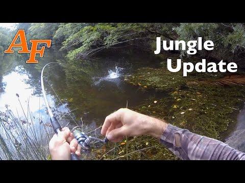 Jungle Fishing after Rain Explore EP.297