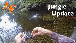 Jungle Fishing after some Rain Andy's Fish Video EP.297(Andy returns to the jungle to see if a few inches of rain has changed the fishing and to see if the fish from the last episode will survive in their small lagoons., 2016-01-25T14:00:00.000Z)