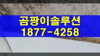 인천동구 곰팡이제거, 미추홀구 주안동 곰팡이청소(단열 …