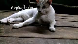 แมวพูดได้ Google translate