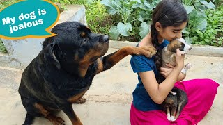 Adopting street dog puppy||funny puppy videos||rottweiler dog.
