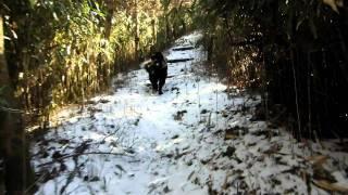 11ヶ月のニューファンのドンちゃんとラブラドールのアンは雪道で大は...