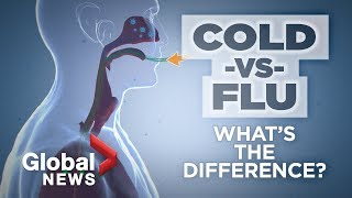 How To Tell The Flu From A Cold