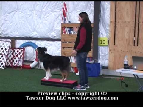 Step Up Your Training For Dog Sports