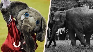 Ask Alabama: Why doesn't University of Alabama have a live elephant?