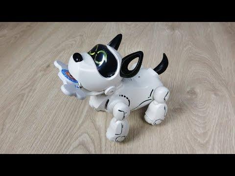 Мультфильм про робота и собаку робота
