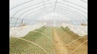 河南南阳:农村小伙在外打工干够了,回家创业种西瓜,能成功吗?