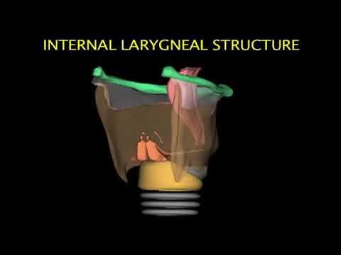 Larynx Animation