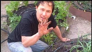 Best Way to Get Your Hands & Fingernails Clean after Gardening