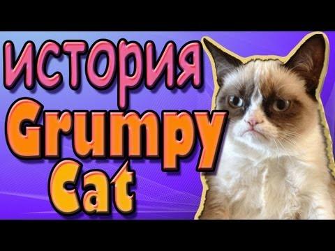 Злой кот.avi