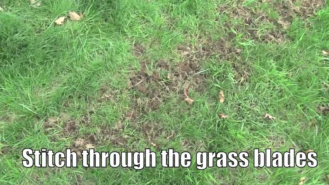 charming how to plant grass seed on existing lawn Part - 4: charming how to plant grass seed on existing lawn awesome ideas