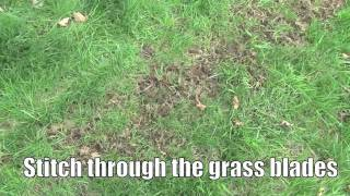 How to - Plant lawn seed to repair a thin lawn