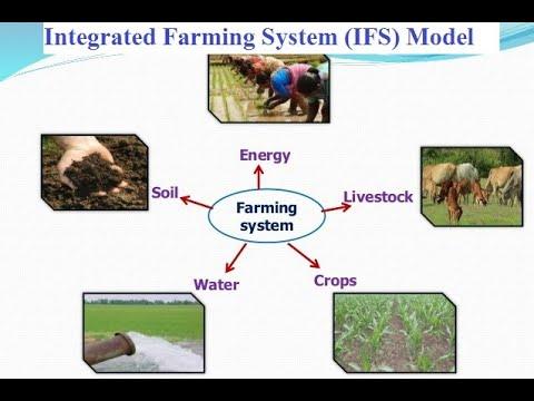 Integrated farming system (IFS) Model and allied enterprises (एकीकृत कृषि प्रणाली (IFS) मॉडल