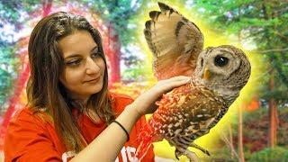 OWL ATTACK! Tokyo Japan Owl Cafe | Huge Cotton Candy | Japan Vlog #3
