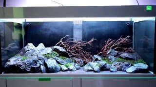 Social Escape - Step by Step entsteht ein Aquarium zum Entspannen (Anti-Burn-Out)