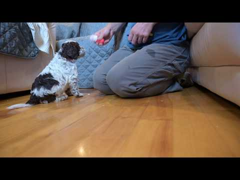 Giving your puppy a voice.
