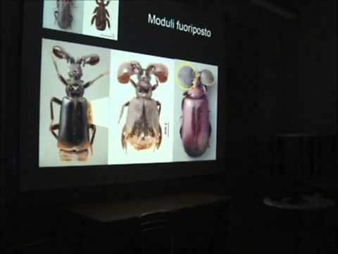 Animali e piante improbabili - Prof. Alessandro Minelli