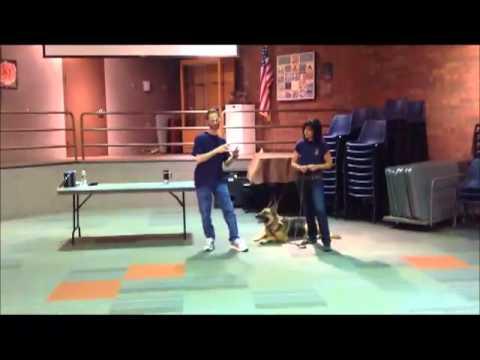 Canine Aggression & Behavior Lecture, Canine Case Squad