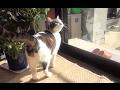 【のらの外に出たい病がはじまった 猫のお風呂⑨】A cat that could not go outside seemed sad.