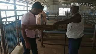 NEW FARM CLEANING TECHNOLOGY goatfarm फार्म स्वछ करण्या ची एक आयडिया- BAKRIWALE