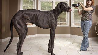 ТОП 10 Домашних животных, попавших в Книгу рекордов гинесса