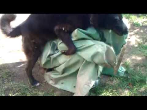 Видео как мужик трахает телку так