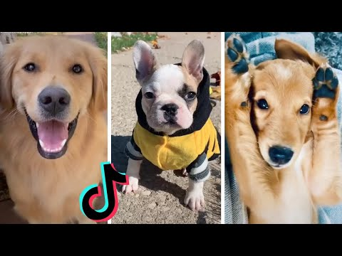 Cute & Funny Dogs of TikTok ~ Try Not to Say AWWW!