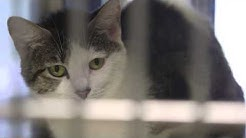 Changes at the San Angelo Animal Shelter