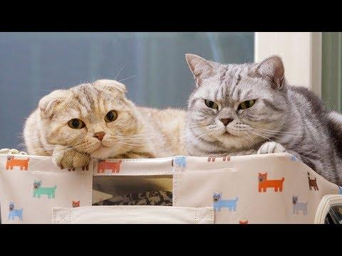 옷 정리 방해하는 고양이 수리&라온
