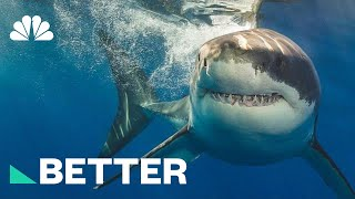 Chew On This: How To Protect Yourself From A Shark Attack | Better | NBC News