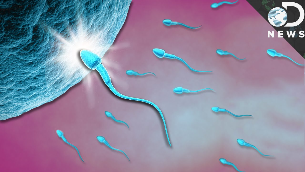 how sperm meet the egg