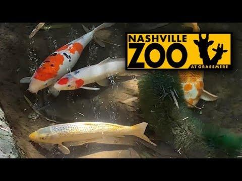 Huge Koi Pond At The Nashville Zoo (Nashville, Tennessee)