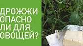 Уборка кукурузы 2017, Беларусь. Съёмка с квадрокоптера. - YouTube