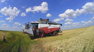 114-Д.(2С.).Приколы в ожидании уборки.Проба скоса пшеницы Акрос-530.МАЗ-5551