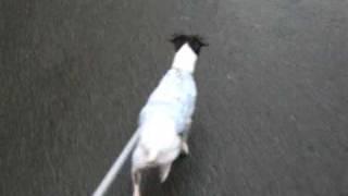 曇空の中、散歩にでかけたら、突然の雨。 激しくなる雨の中、走る・・・