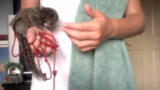 Pet Monkey Care: Do Monkeys make good pets?