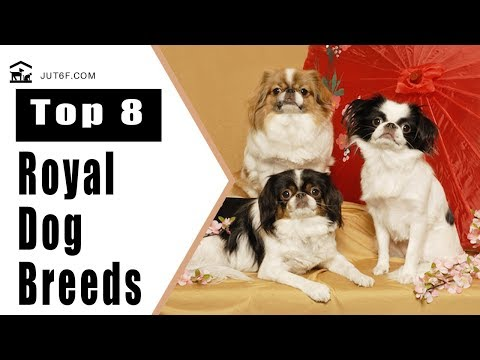 Top 8 Royal Dog Breeds